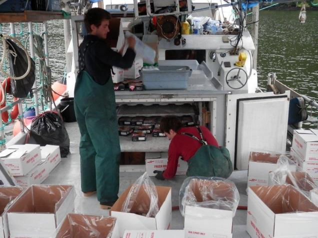 Loading freezer plates